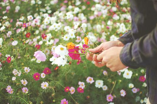 日志:俄会等到第三个春天 再看满山旭阳花